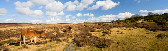 Horses grazing on wild marshes