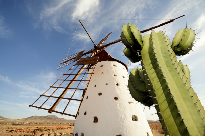 Close up view of a windmill and cactus