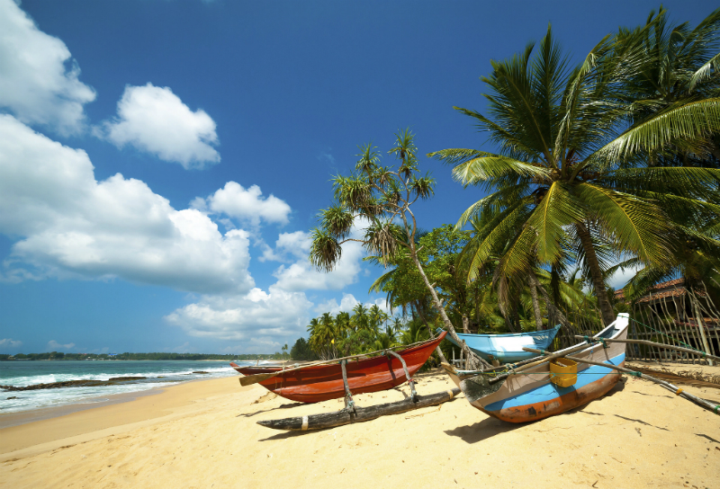Fishing boats under the palms of a sri lankan beach
