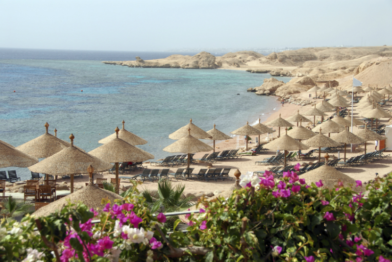 A sea of straw beach umbrellas on a beautiful beach in Sharm el Sheikh, Egypt