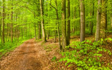 Forest in UK