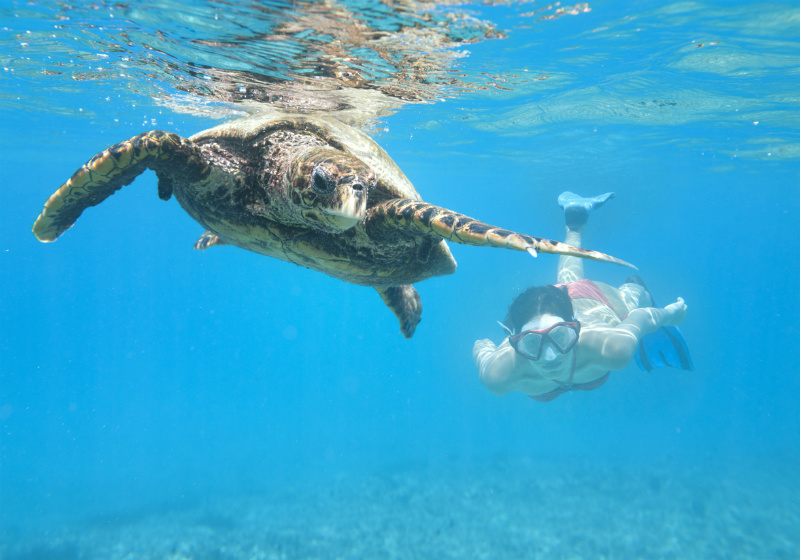 Snorkelling with turtles in the Seychelles