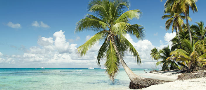 Palm tree lined beach in Seychelles