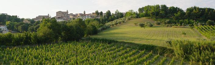 Vineyard Appassionata