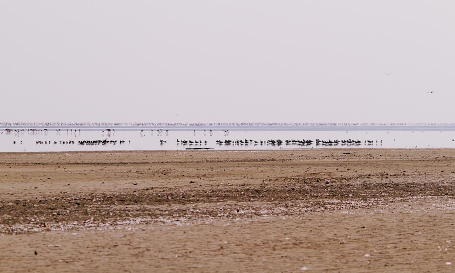 Flock of Lesser Flamingos in Nata Bird Sanctuary, Botswana