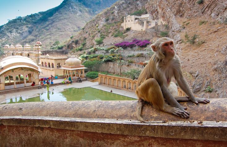 Monkey Temple nearby Jaipur, India.