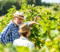 Touring a UK vineyard