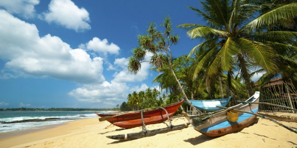 Fishing boats under the palms of a Sri Lankan beach