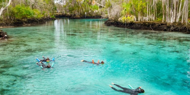 Family snorkelling at spring in Crystal River Florida USA