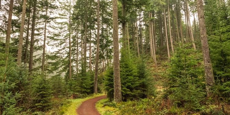 Winding footpath in Kielder Forest
