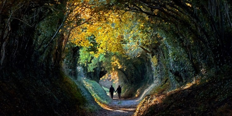 Tree lined tunnel in West Sussex