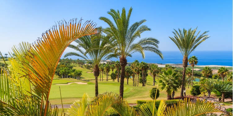 an image of palm trees on a golf course in Tenerife