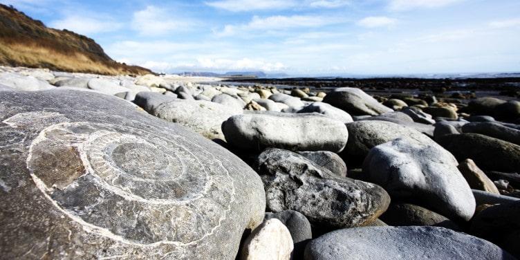 Fossils on the Jurassic coast Lyme Regis